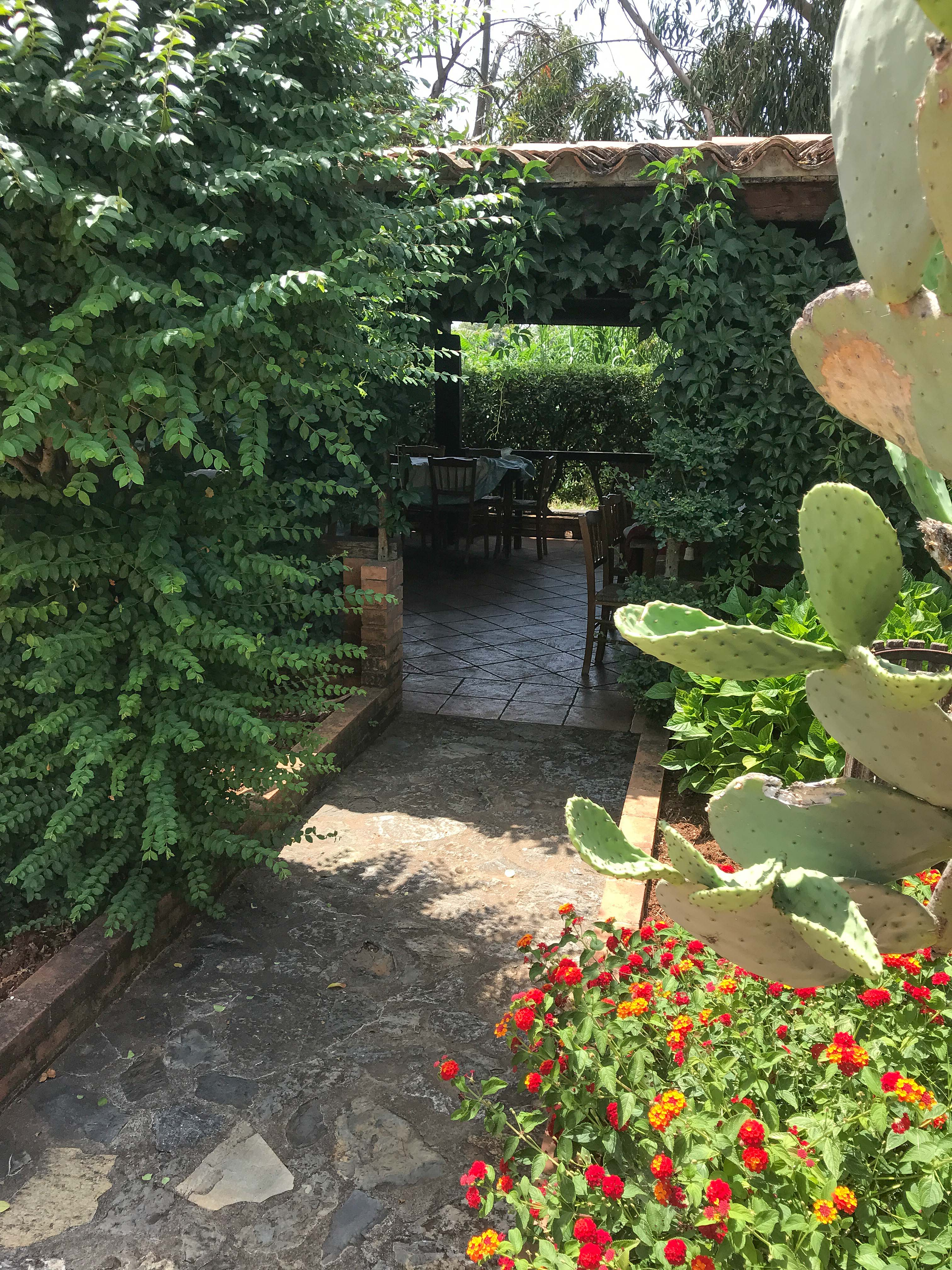 Garden Aligia